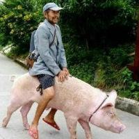 骑猪来看美女 | 个人档案